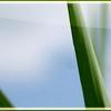 img/header/themen/grass.jpg